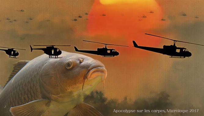 Apocalypse sur les carpes Micrologie 2017