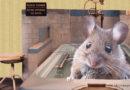 15 000 ans de coloc' avec les souris
