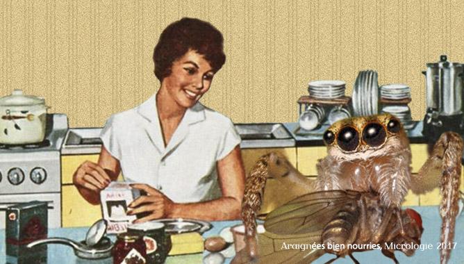Des araignées bien nourries, Micrologie