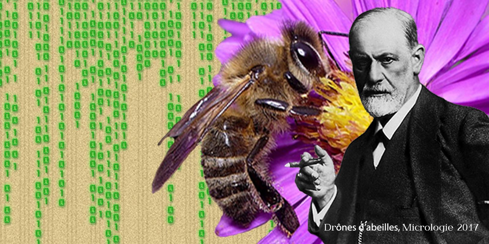 Drône d'abeilles, micrologie