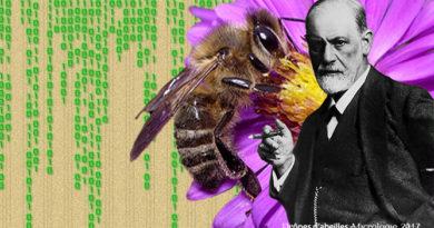 Drones d'abeilles, Micrologie 2017