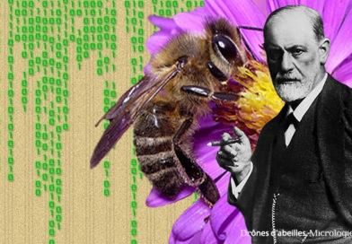 DrÔnes d'abeilles