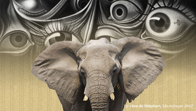 rêve des éléphants, Micrologie