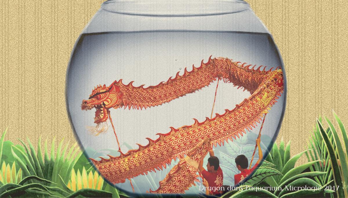 Dragon dans l'aquarium, Micrologie 2017