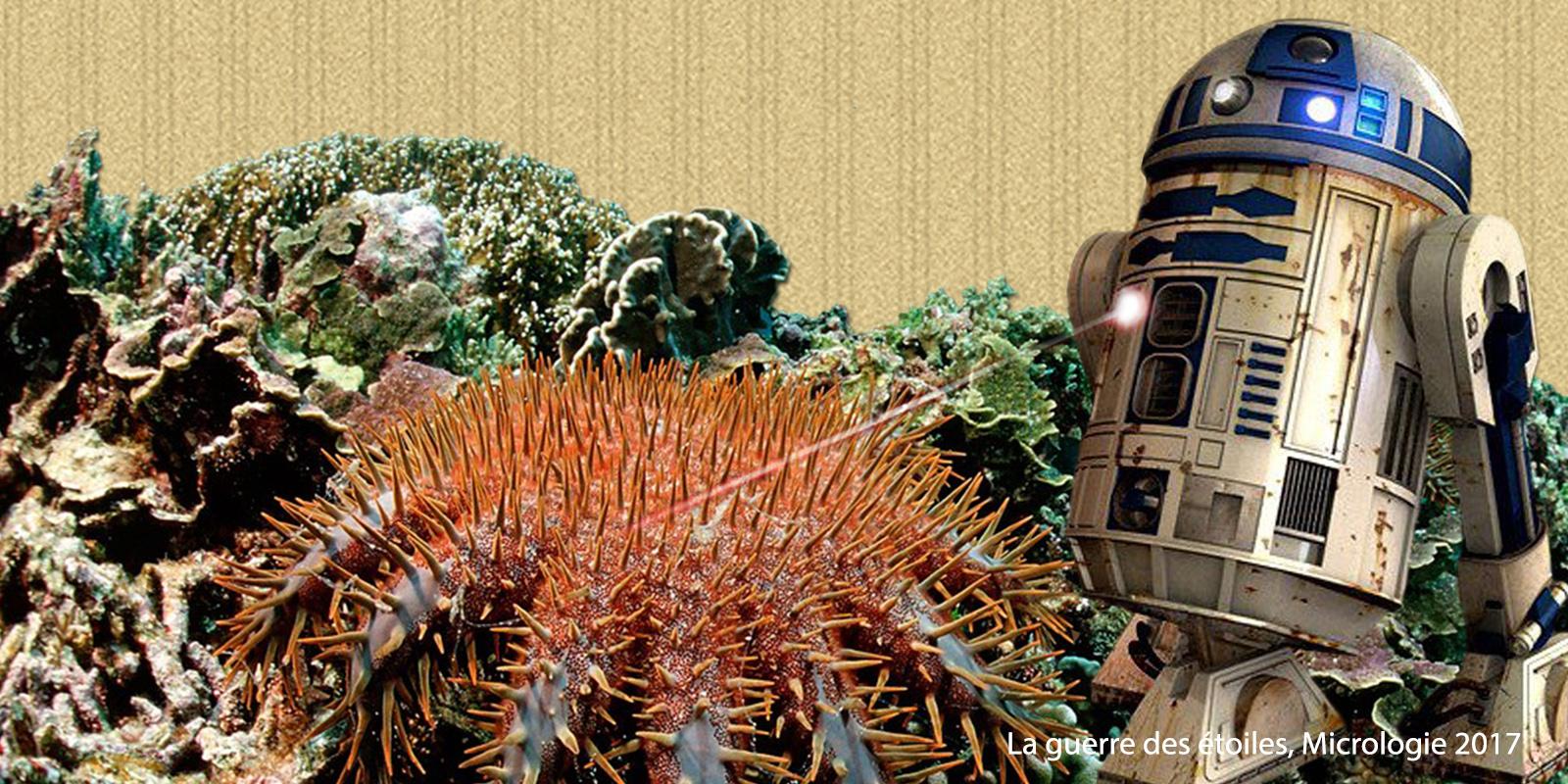 La guerre des étoiles, micrologie