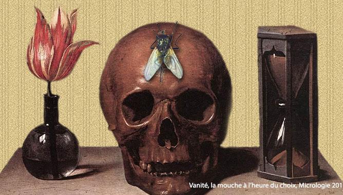 Vanité, la mouche à l'heure du choix, Micrologie, 2017