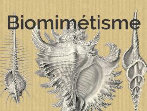biomimétisme, micrologie