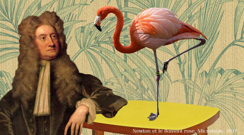 Newton et le flamant rose, micrologie 2017