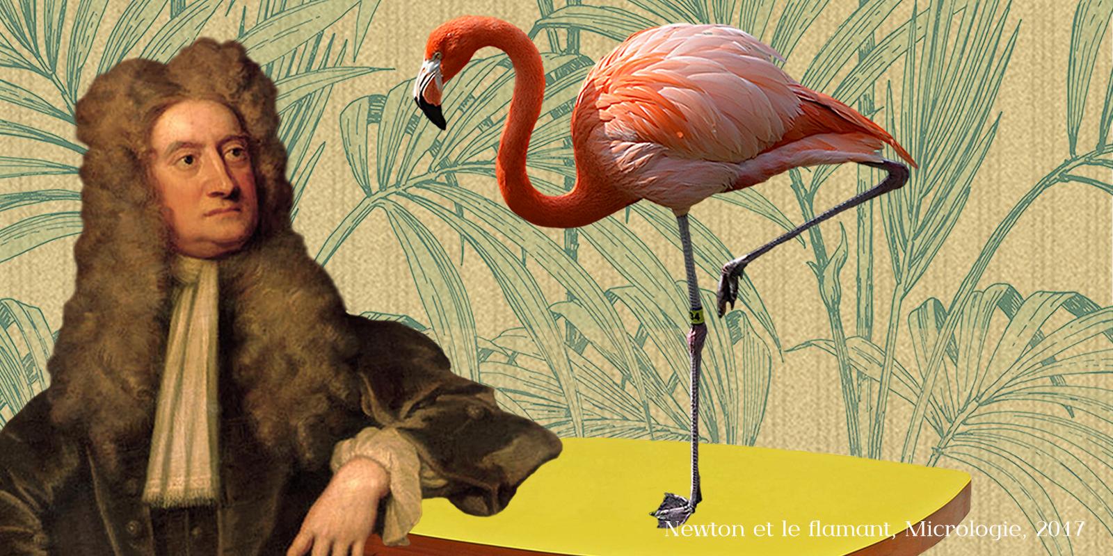 Newton et le flamant, micrologie