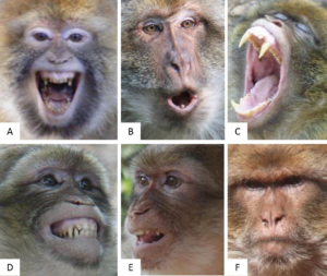 Expressions chez le macaque