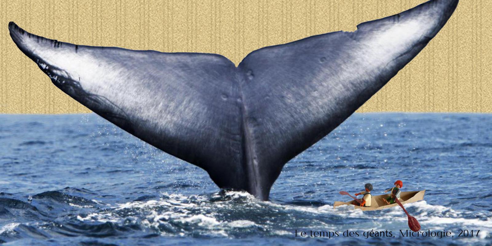 Baleines : le temps des géants, micrologie