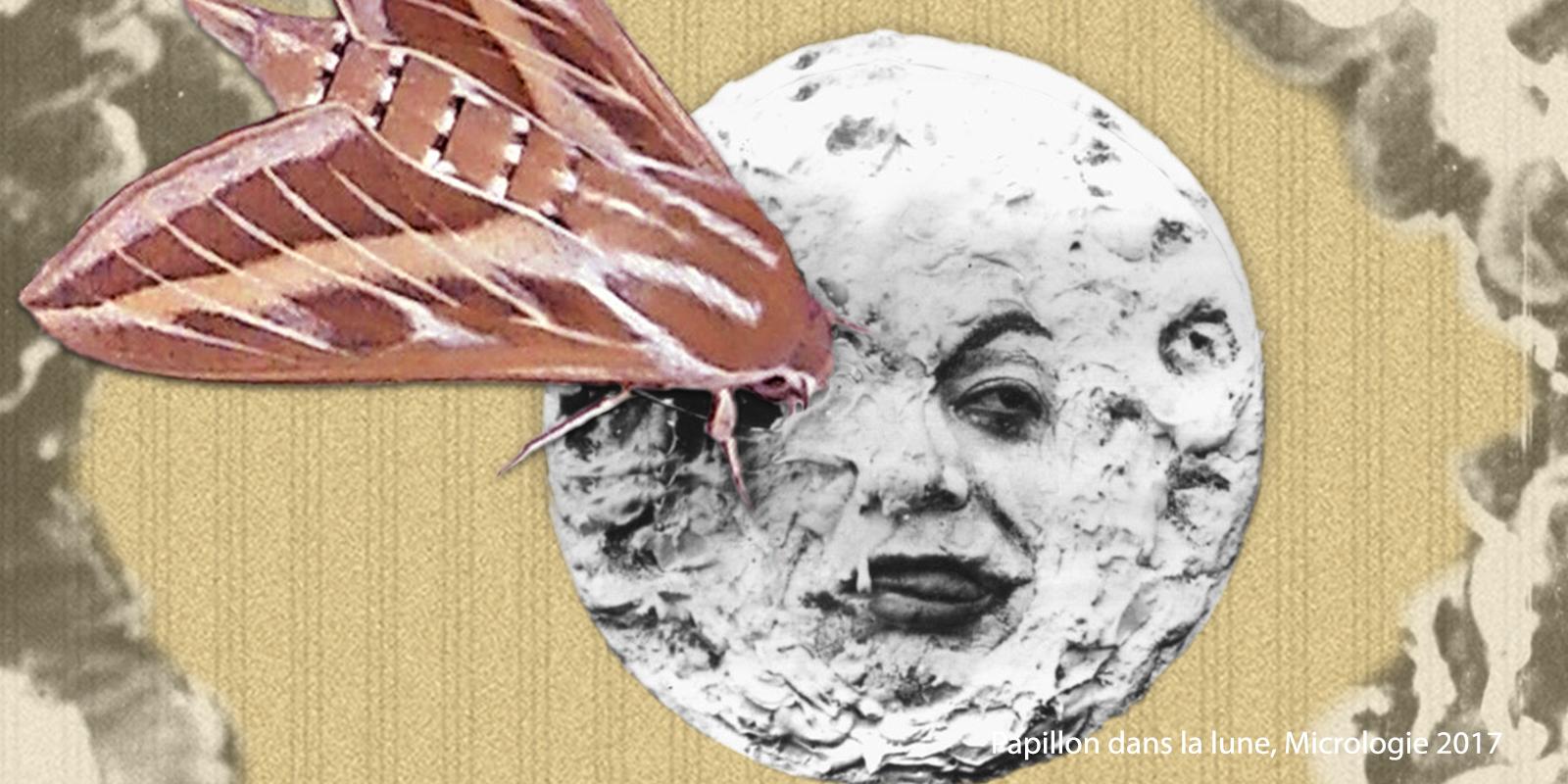 Papillon dans la lune, micrologie