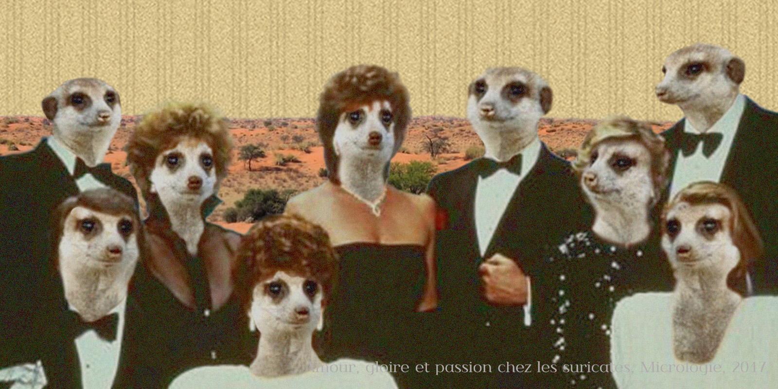 amour, gloire et passion chez les suricates, micrologie