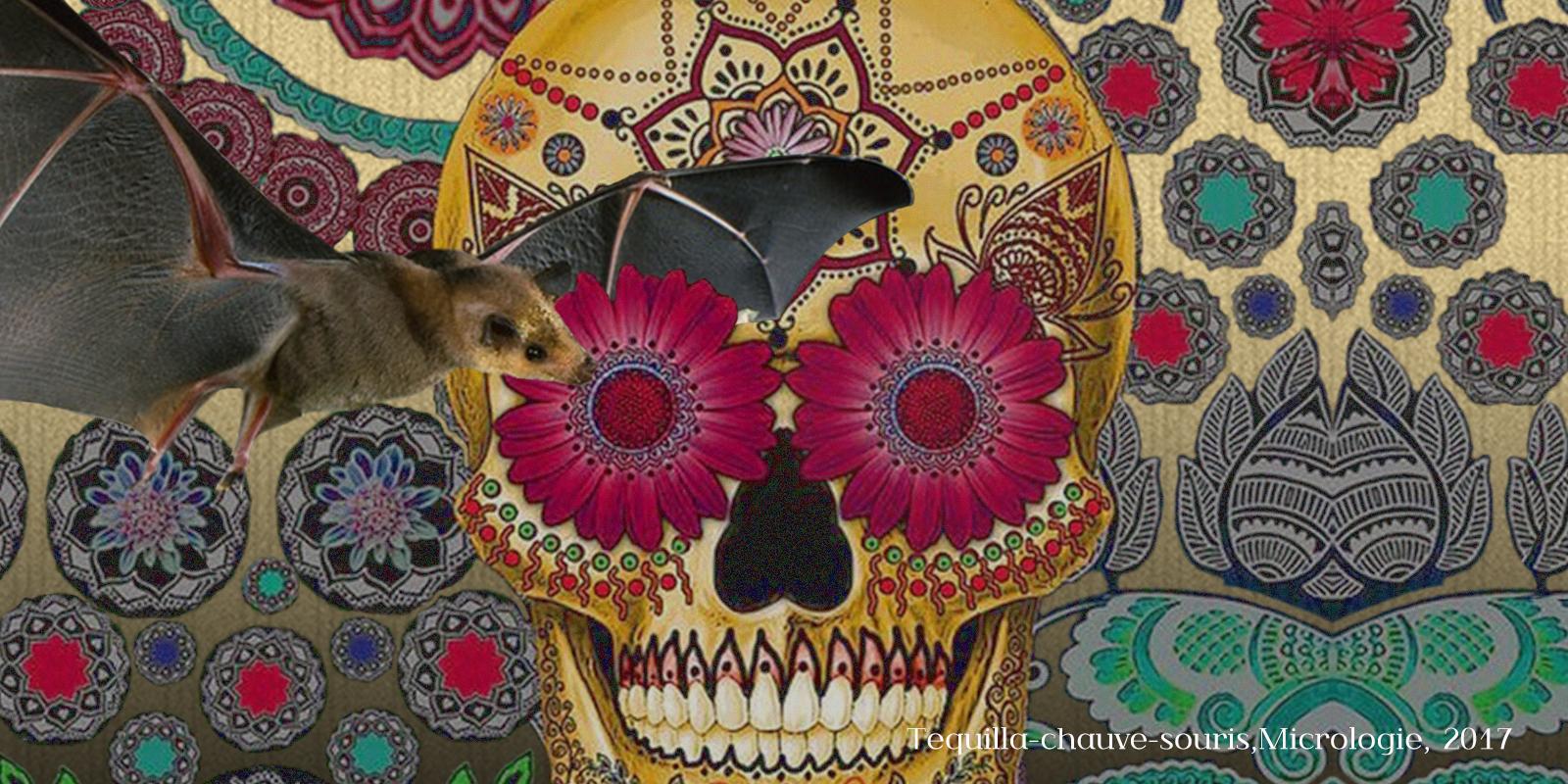Tequila et chauve-souris, micrologie