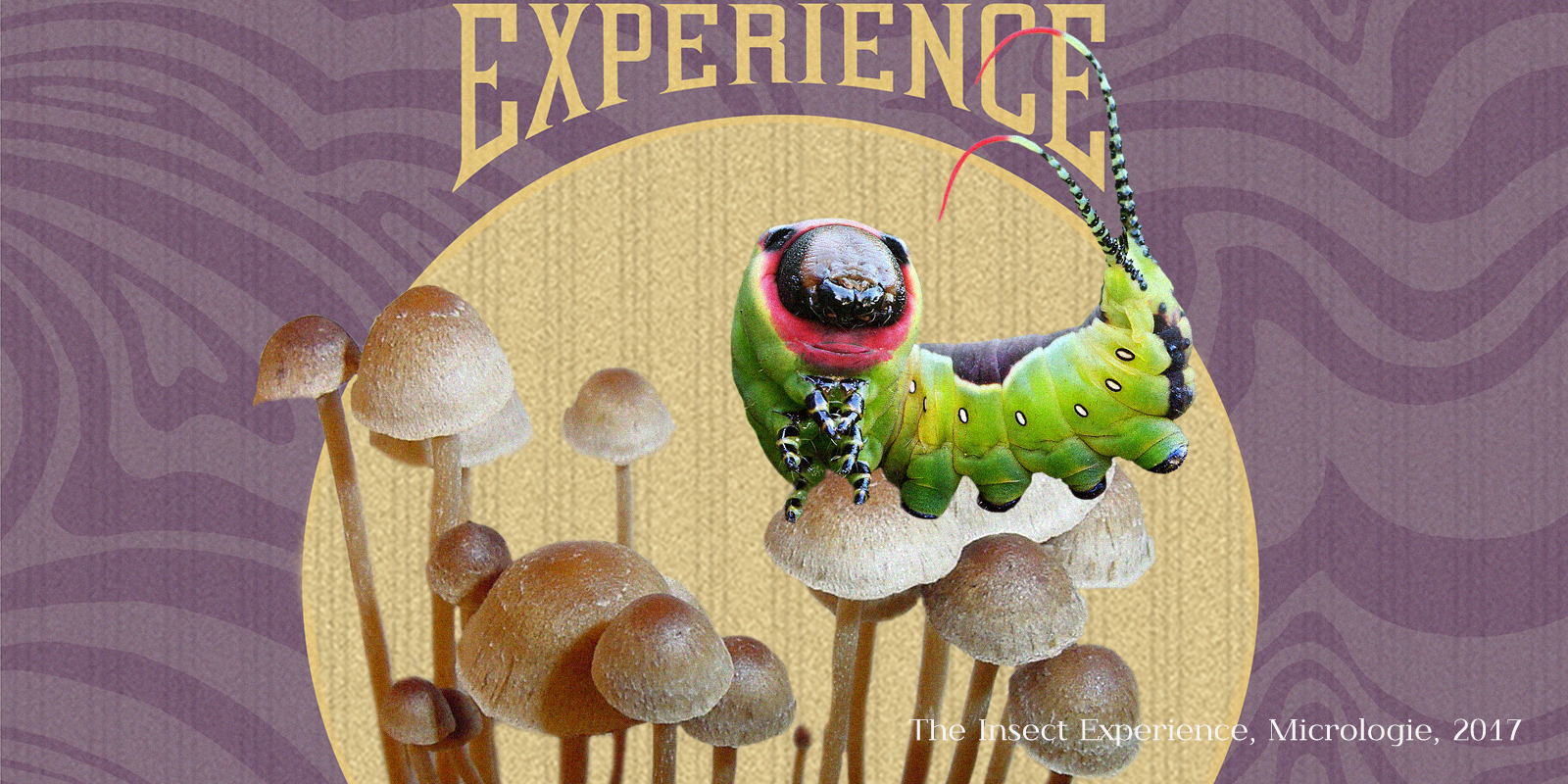 The insect experience, micrologie 2017
