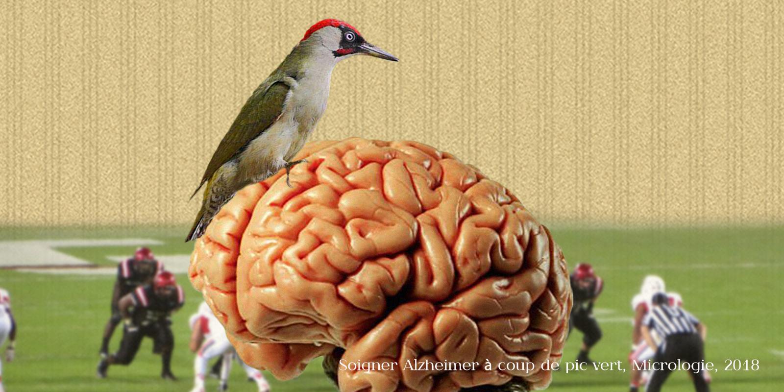 Alzheimer et pic vert, micrologie