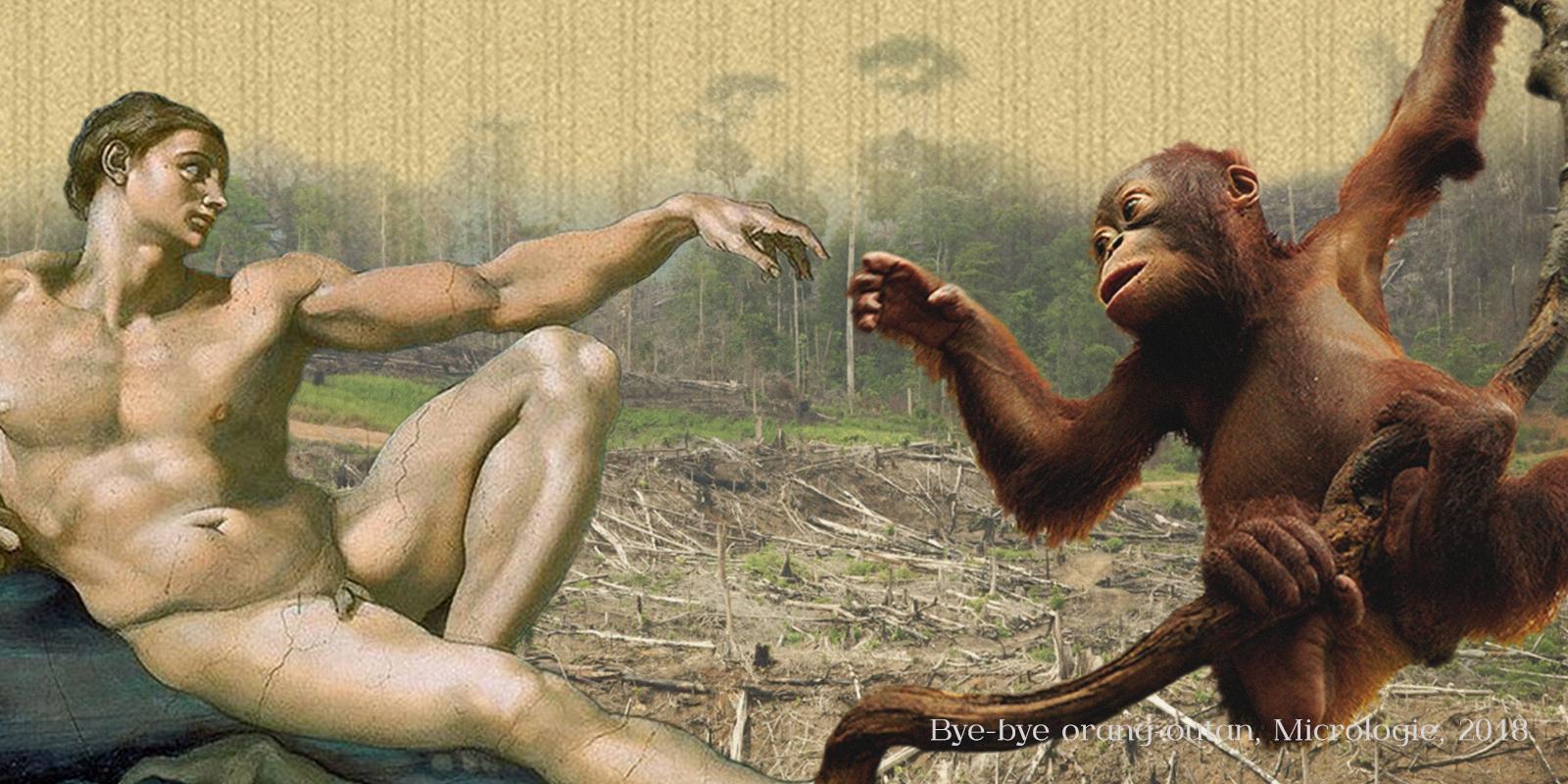 orangs-outans, micrologie